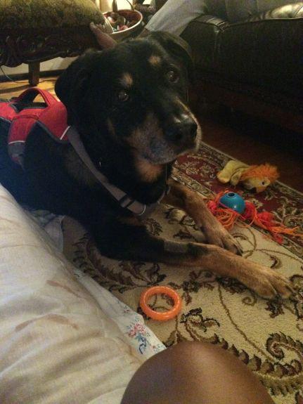 tripawd dog won't eat